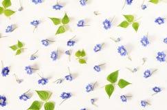 τα λουλούδια εμβλημάτων ανασκόπησης διαμορφώνουν λίγη ρόδινη σπείρα Σχέδιο από τα μπλε λουλούδια και τα πράσινα φύλλα Στοκ φωτογραφίες με δικαίωμα ελεύθερης χρήσης