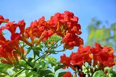 τα λουλούδια εμβλημάτων ανασκόπησης διαμορφώνουν λίγη ρόδινη σπείρα Στοκ εικόνα με δικαίωμα ελεύθερης χρήσης