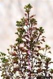 τα λουλούδια ζουν ρόδινο φυτό αρκετά Στοκ εικόνα με δικαίωμα ελεύθερης χρήσης