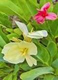 Τα λουλούδια, κίτρινα αυξάνονται χτυπούν ελαφρά με ζωηρόχρωμο Στοκ εικόνα με δικαίωμα ελεύθερης χρήσης