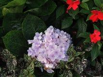 Τα λουλούδια και τα φύλλα Στοκ φωτογραφία με δικαίωμα ελεύθερης χρήσης