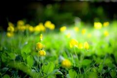 Τα λουλούδια κλείνουν επάνω στο υπόβαθρο Στοκ Εικόνες