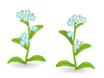 τα λουλούδια με ξεχνούν ό Στοκ Φωτογραφίες