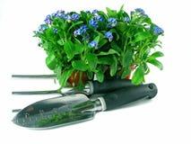 τα λουλούδια με ξεχνούν ό Στοκ φωτογραφίες με δικαίωμα ελεύθερης χρήσης
