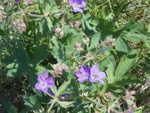 τα λουλούδια ομορφιάς στο λιβάδι και πράσινος βγάζουν φύλλα στοκ φωτογραφία με δικαίωμα ελεύθερης χρήσης