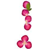 τα λουλούδια πατούν κόκκινο αυξήθηκαν Στοκ Εικόνες