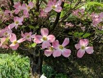 Τα λουλούδια στον κήπο στοκ εικόνες