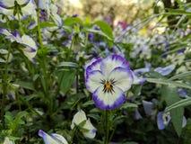 Τα λουλούδια στον κήπο στοκ φωτογραφία με δικαίωμα ελεύθερης χρήσης