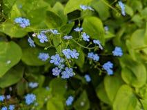 Τα λουλούδια στον κήπο στοκ φωτογραφία