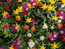 Τα λουλούδια στον κήπο στοκ εικόνα με δικαίωμα ελεύθερης χρήσης