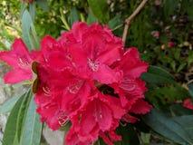 Τα λουλούδια στον κήπο στοκ φωτογραφίες με δικαίωμα ελεύθερης χρήσης