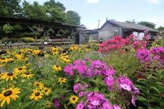 Τα λουλούδια στο πρώτο πλάνο με το κατάστημα στο υπόβαθρο στοκ εικόνα με δικαίωμα ελεύθερης χρήσης