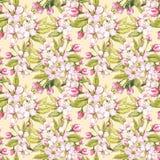 Τα λουλούδια της Apple δίνουν τη συρμένη άνευ ραφής απεικόνιση watercolor σχεδίων Στοκ εικόνες με δικαίωμα ελεύθερης χρήσης