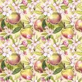 Τα λουλούδια της Apple δίνουν τη συρμένη άνευ ραφής απεικόνιση watercolor σχεδίων Στοκ Εικόνες