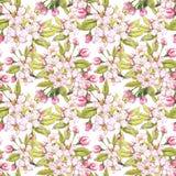 Τα λουλούδια της Apple δίνουν τη συρμένη άνευ ραφής απεικόνιση watercolor σχεδίων Στοκ εικόνα με δικαίωμα ελεύθερης χρήσης