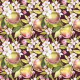 Τα λουλούδια της Apple δίνουν τη συρμένη άνευ ραφής απεικόνιση watercolor σχεδίων Στοκ Φωτογραφίες