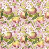 Τα λουλούδια της Apple δίνουν τη συρμένη άνευ ραφής απεικόνιση watercolor σχεδίων Στοκ Φωτογραφία