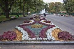 Τα λουλούδια φθινοπώρου σε ένα κρεβάτι στο πάρκο Kharkiv Shevchenko εξωραΐζουν cit Στοκ εικόνα με δικαίωμα ελεύθερης χρήσης