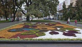 Τα λουλούδια φθινοπώρου σε ένα κρεβάτι στο πάρκο Kharkiv Shevchenko εξωραΐζουν cit Στοκ Εικόνα