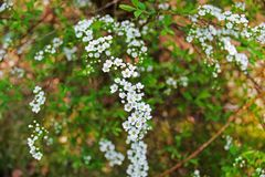 Τα λουλούδια στοκ εικόνα με δικαίωμα ελεύθερης χρήσης