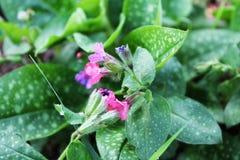 Τα λουλούδια στοκ φωτογραφίες
