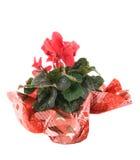 τα λουλούδια Στοκ φωτογραφίες με δικαίωμα ελεύθερης χρήσης