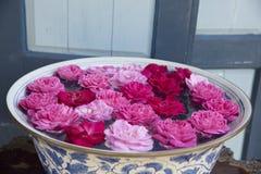 Τα λουλούδια Plumeria είναι αναζωογονώντας Στοκ εικόνες με δικαίωμα ελεύθερης χρήσης