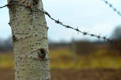 τα μάτια, δέντρο, φύση κοιτάζουν Στοκ Εικόνες