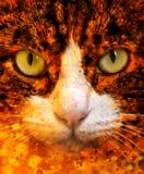 Τα μάτια γατών κλείνουν επάνω το πορτρέτο Στοκ Φωτογραφία