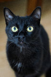 Τα μάτια του κατοικίδιου ζώου στοκ φωτογραφίες