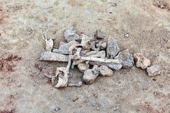 Τα μέρη των κόκκαλων στο έδαφος αρχαιολογικό πάρκο paphos kato ανασκαφών της Κύπρου Κλείστε επάνω τα ανθρώπινα υπολείμματα στοκ φωτογραφίες