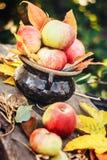 Τα μήλα στο δοχείο στον κήπο με το φθινόπωρο βγάζουν φύλλα στο ξύλινο υπόβαθρο Στοκ φωτογραφία με δικαίωμα ελεύθερης χρήσης