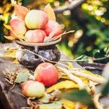 Τα μήλα στο δοχείο στον κήπο με το φθινόπωρο βγάζουν φύλλα στο ξύλινο υπόβαθρο Στοκ φωτογραφίες με δικαίωμα ελεύθερης χρήσης