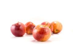 τα μήλα απομόνωσαν το κόκκ&iot Στοκ Εικόνες