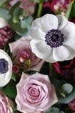 Τα μακρο άσπρα λουλούδια αυξήθηκαν anemone, anemones Στοκ Εικόνες