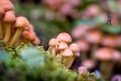 Τα μανιτάρια αυξάνονται δασικό στο δηλητηριώδη, μη φαγώσιμος στοκ φωτογραφίες με δικαίωμα ελεύθερης χρήσης