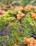 Τα μανιτάρια αυξάνονται δασικό στο δηλητηριώδη, μη φαγώσιμος στοκ φωτογραφία με δικαίωμα ελεύθερης χρήσης