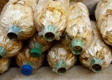 Τα μανιτάρια καλλιεργούν Στοκ Φωτογραφία