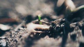 Τα μαύρα μυρμήγκια σέρνονται στο χαλαρό έδαφος μεγάλο απελευθέρωσης πράσινο ύδωρ φωτογραφίας φύλλων μακρο φιλμ μικρού μήκους