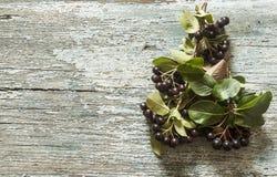 Τα μαύρα chokeberry (melanocarpa Aronia) μούρα με βγάζουν φύλλα στο ξύλο στοκ εικόνα με δικαίωμα ελεύθερης χρήσης