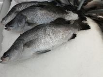 Τα μαύρα tilapia του Νείλου ψάρια που τίθενται επάνω πωλούν στην αγορά στοκ φωτογραφία