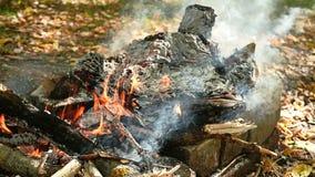 Τα μεγάλα εγκαύματα βιβλίων σε μια πυρκαγιά Τα φύλλα του εγγράφου βρίσκονται στις γλώσσες της κόκκινης φλόγας και της στροφής στι απόθεμα βίντεο