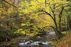 Τα μεγάλα καπνώδη βουνά το φθινόπωρο στοκ φωτογραφίες με δικαίωμα ελεύθερης χρήσης