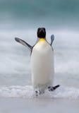 Τα μεγάλα άλματα βασιλιάδων penguin ποτίζουν εντελώς ξαφνικά κολυμπώντας μέσω του ωκεανού στο νησί των Νησιών Φόλκλαντ Στοκ φωτογραφίες με δικαίωμα ελεύθερης χρήσης