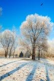 Τα μεγάλα δέντρα με την πάχνη και τα πουλιά Στοκ Εικόνες