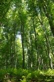 Τα μεγάλα δέντρα Στοκ εικόνα με δικαίωμα ελεύθερης χρήσης