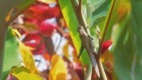 Τα μεγάλα mantis μένουν σε έναν μίσχο εγκαταστάσεων απόθεμα βίντεο