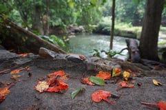 Τα μειωμένα κόκκινα φύλλα στοκ εικόνες