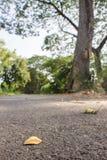 Τα μειωμένα φύλλα στο έδαφος στοκ εικόνες με δικαίωμα ελεύθερης χρήσης