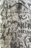 Τα μηνύματα αγάπης χάρασαν στο δέντρο στην πάροδο εραστών ` s, πράσινη θέση κληρονομιάς αετωμάτων Στοκ Εικόνα